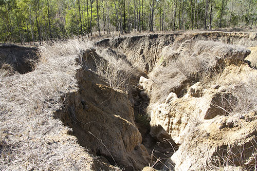 Extreme erosion at the edge of a forest.