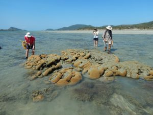 People checking seagrass.